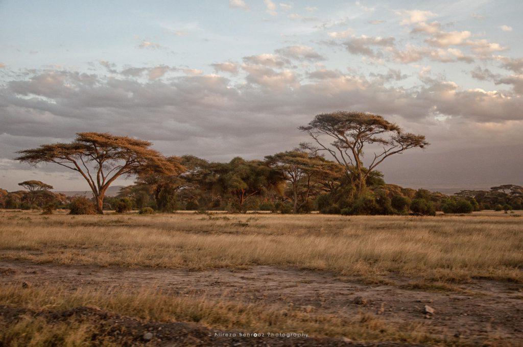 Amboseli landscape