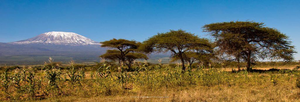 Mount Kilimanjaro IX