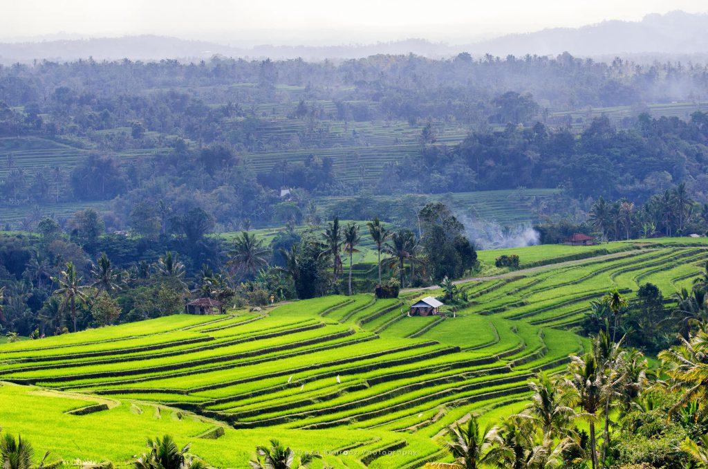 Jatiluwih Rice Fields I
