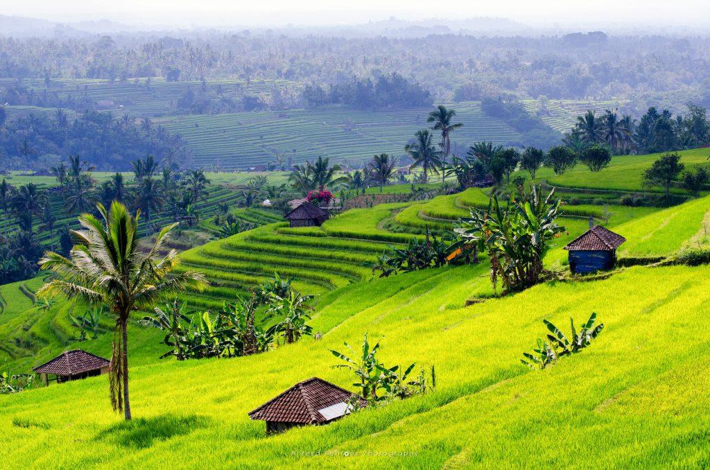 Jatiluwih Rice Fields II