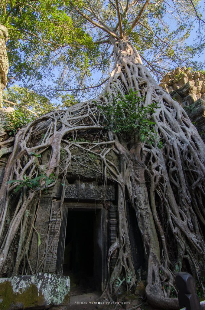 Forests reclaim the mysterious temple of Ta Prohm in Angkor
