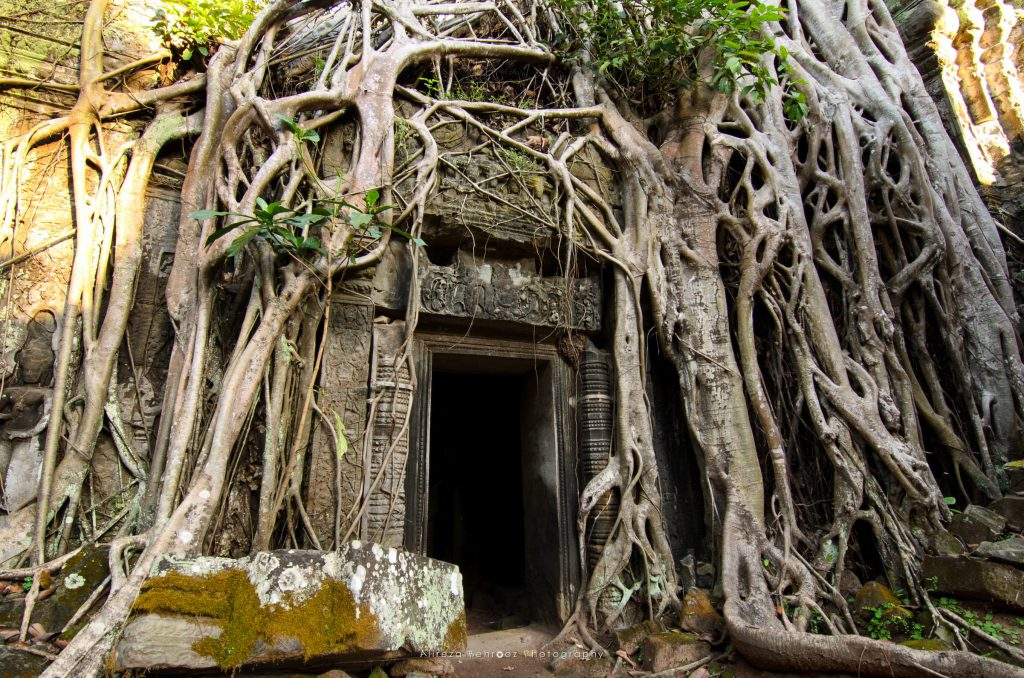 The exterior wall of Ta Prohm framed by the roots of trees