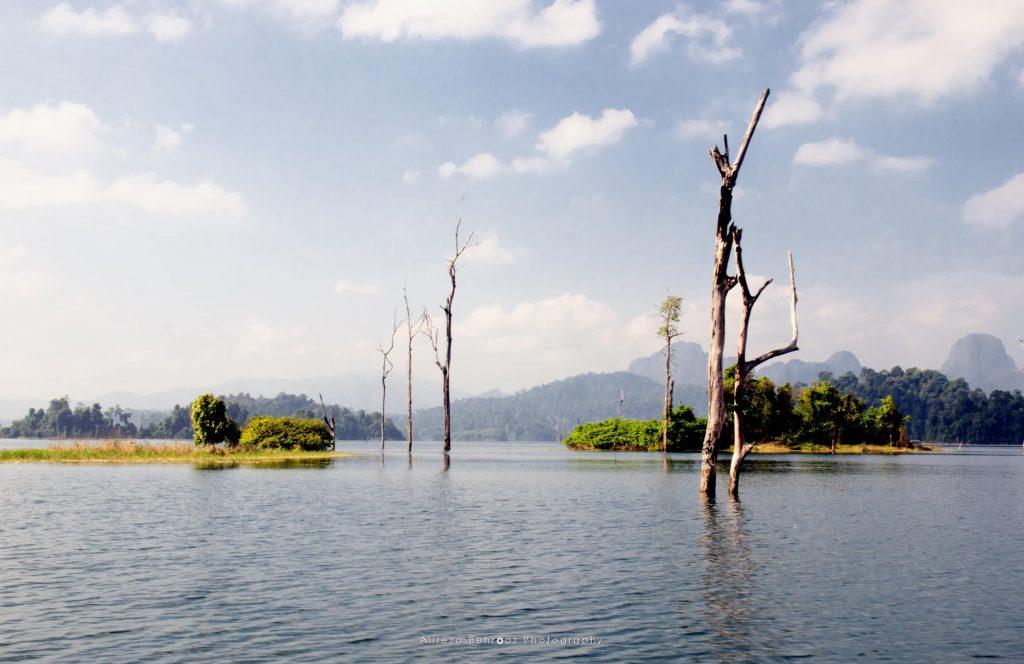 Dead threes, Khao Sok national park, Thailand