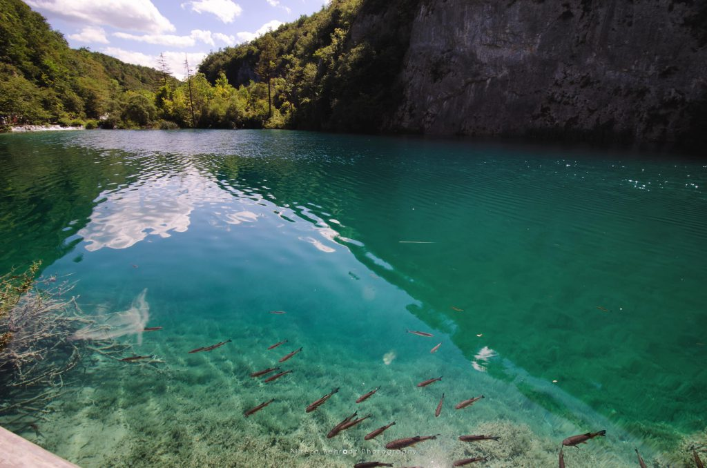 Fish in the crystal-clear water of Plitvice Lakes, Croatia